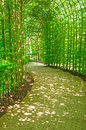 Tree arched enclosed sunlit pathway