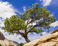 Tree atop angels landing zion np a bonsai like high a summit in utah s national park stands against a blue cloud draped sky Stock Photo