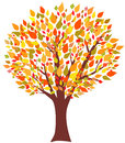 Tree of Autumn Royalty Free Stock Photography