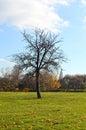 Tree in autumn park Royalty Free Stock Photo