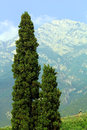 Tree on  background montin Baldo Royalty Free Stock Photos