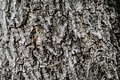 Tree background for texture Royalty Free Stock Photo