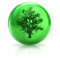 Tree in the ball Royalty Free Stock Photography
