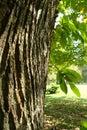 Tree bark Royalty Free Stock Photo