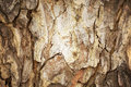 Tree bark abstract background, Retro style process. Royalty Free Stock Photo