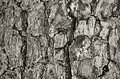 Tree bark abstract texture of background Royalty Free Stock Images