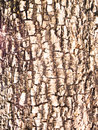 Tree bark background / texture