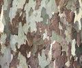 Tree Bark Background Texture Royalty Free Stock Photo