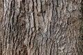 Tree bark background texture. Royalty Free Stock Photo