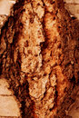 Tree bark background texture of in rust color Stock Photo