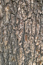 Tree bark the close up of Royalty Free Stock Photography