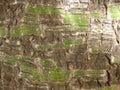 Tree bark close up of Royalty Free Stock Image