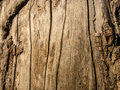 Tree bark close up daylight wood texture Royalty Free Stock Photography