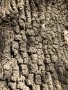 stock image of  Tree bark close up