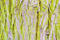 Tree bark close view of background Royalty Free Stock Image