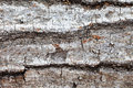 Tree bark closeup a detailed of suitable for backgrounds Royalty Free Stock Image