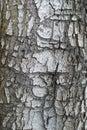 Tree bark closeup usable as texture Stock Photo