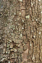Tree bark closeup usable as texture background or Stock Photo