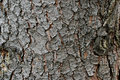 Tree bark, cover Royalty Free Stock Photo