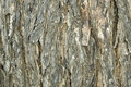 Tree Bark Detail Stock Images