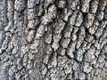 Tree bark detail an old oak with creates this abstract nature image Stock Image