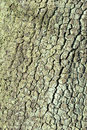 Tree bark detailed structure of old peach Stock Photos