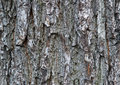 Tree bark details Stock Photo