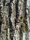 Tree bark with lichens macro detail details textures patterns Royalty Free Stock Image