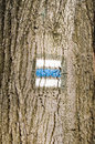 Tree bark with mark natural detail of wooden painted travel blue trail Stock Photos