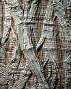 Tree Bark - Montezuma Cypress Royalty Free Stock Image