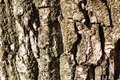 Tree bark photographed closeup autumn day in the park Stock Image