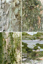 Tree bark set of four barks collection Stock Photography