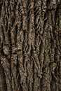 Tree bark texture for background Stock Image