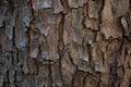 Tree bark texture Royalty Free Stock Photo