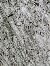 Tree bark texture close up Royalty Free Stock Images