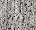 Tree bark texture close up Stock Photos