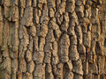 Tree bark texture close up of Stock Images