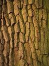 Tree bark texture close up of Stock Photo