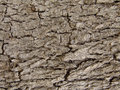 Tree bark texture close up Royalty Free Stock Image