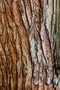 Tree bark texture closeup selective focus. Brown bark wood use as natural background. Old bark. Oak. Ash. Birch. Poplar. Apple tre