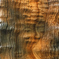 Tree bark texture in the imperial palace museum Royalty Free Stock Image