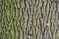 Tree bark texture nature background Stock Image