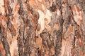 Tree bark texture stock photo Stock Photo