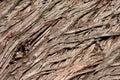 Tree bark texture stock photo Royalty Free Stock Photography