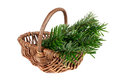 Tree in basket a on a white background Royalty Free Stock Images
