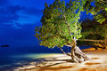 Tree on the beach at night Royalty Free Stock Photo