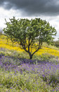 Tree on a beautiful and flowery meadow little gray sky clouds makes strong color contrast Royalty Free Stock Photos