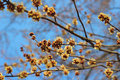 Tree beginning spring and blue sky Stock Image