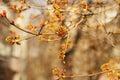 Tree beginnings spring nature background Royalty Free Stock Image
