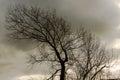 Tree Bent Backwards Royalty Free Stock Photo